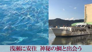 浅瀬に安住 神秘の鯛と出会う「鯛の浦」千葉県鴨川市小湊