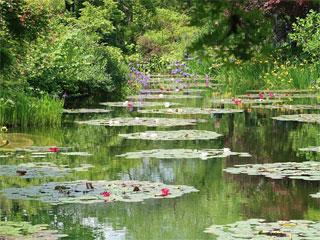 「モネの庭」マルモッタン 高知県北川村