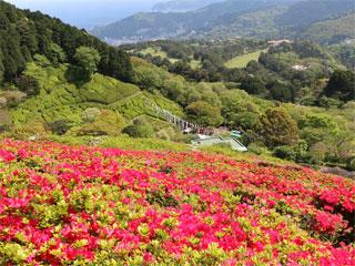 姫の沢公園「ツツジ山」静岡県熱海市