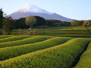 「大淵笹場」静岡県富士市