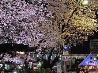旧国立駅舎と夜桜」東京都国立市