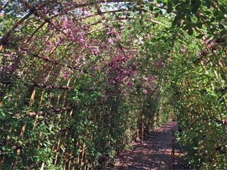 向島百花園「萩のトンネル」東京都墨田区東向島