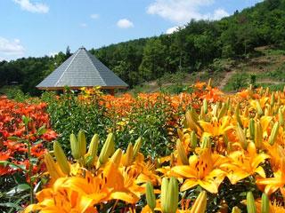 「どんでん平ゆり園」山形県飯豊町
