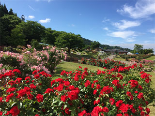東沢公園「東沢バラ公園」山形県村山市
